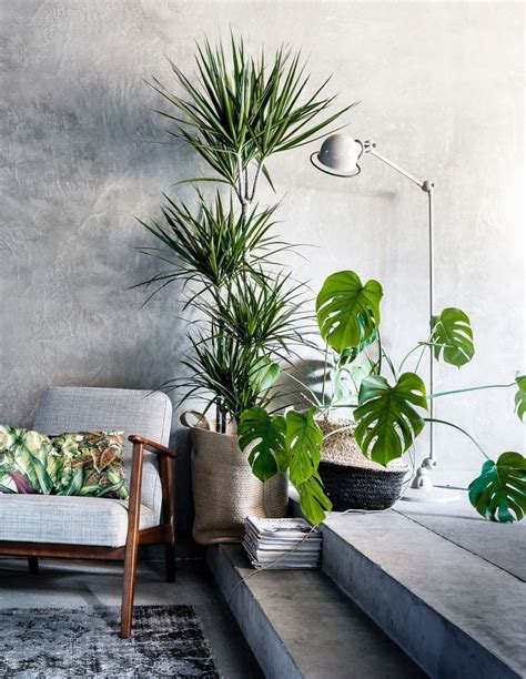 home interior plants best 25 interior plants ideas on pinterest house plants plant decor and plants