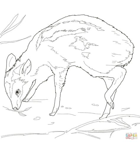 deer mouse coloring page leg poppin mouse deer coloring page free printable