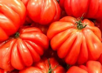 pomodori cuore di bue in vaso vendita piantine db error syntax error prezzo ed