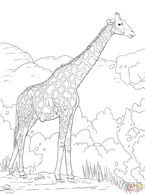 giraffe coloring page for adults coloring pages giraffes coloring pages free coloring