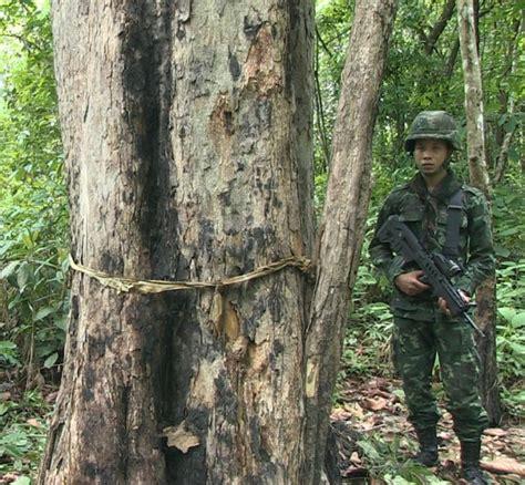 cites in geneva time to tackle surge in wildlife crime