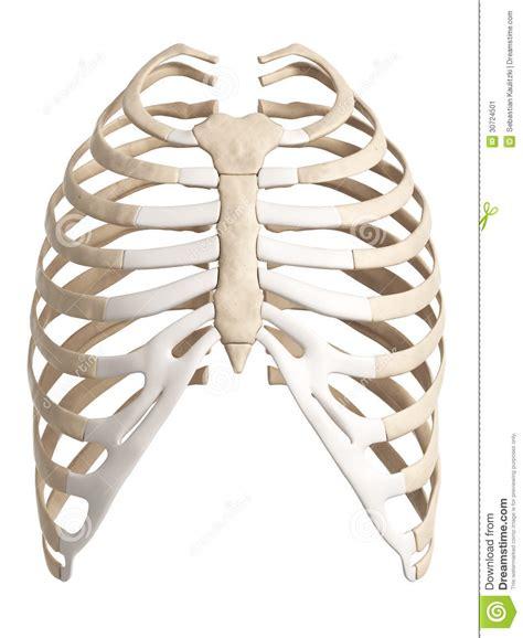 dolore gabbia toracica posteriore gabbia toracica illustrazione di stock immagine di