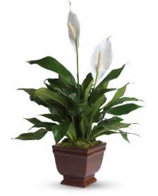 in house plants plants that clean the air in your home no voc plants