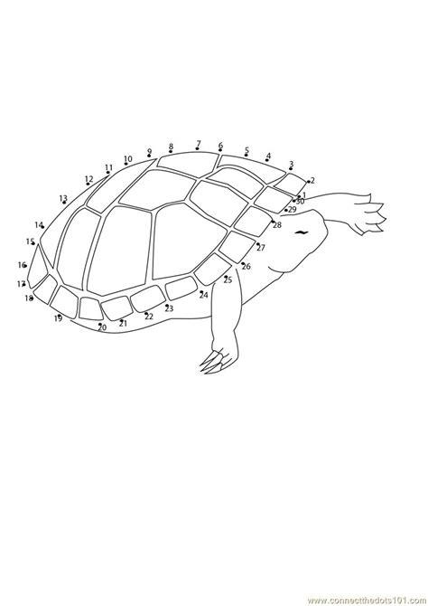 dot to dot turtle printable flying turtle dot to dot printable worksheet connect the