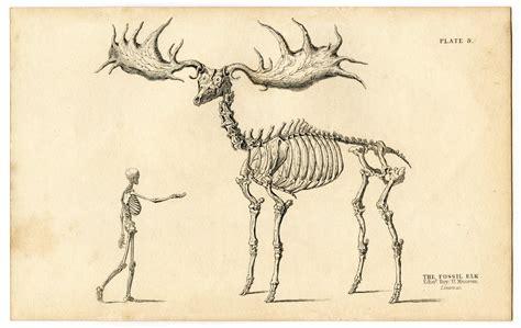 printable animal skeletons instant halloween art printable download walking