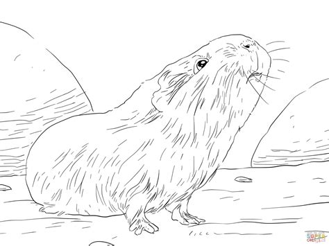 coloring page guinea pig 301 moved permanently