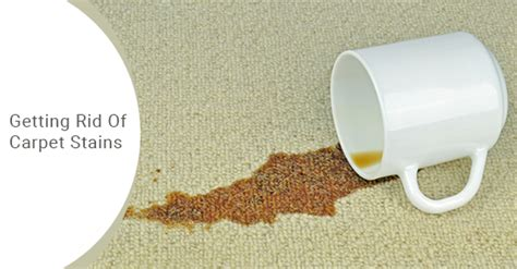 remove milk odor from carpet floor matttroy how to remove human urine stains from carpet floor matttroy