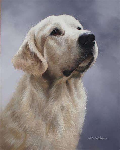 original golden retriever whittaker pet portrait wildlife artist original pastel painting of golden