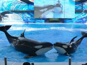 Sea World Activities For Mothers To Pursue In Florida The