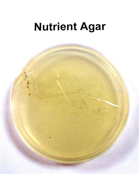 Media Mikroba Nutrient Agar Biolife nutrient agar a photo on flickriver