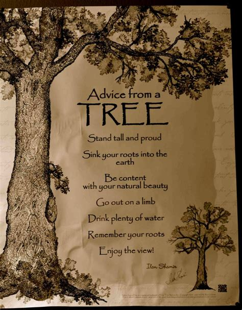 inspirational quotes about trees quotesgram