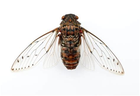 the wings of an insect are attached to this section some insect wings found to have natural antibiotics the