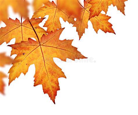 Orange Fall Leaves Border Stock Photo Image Of Border 44348462 Fall Leaves On White Background