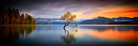 wanaka tree golden hours  australianlight