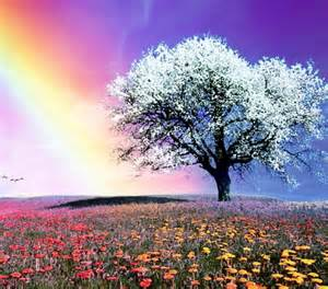 gorgeous nature flowers amp nature background wallpapers