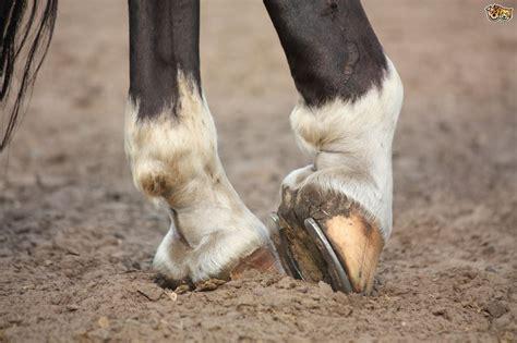 deal  thrush  horses petshomes