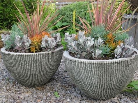 vasi piante grasse migliori vasi per piante grasse piante grasse vasi per