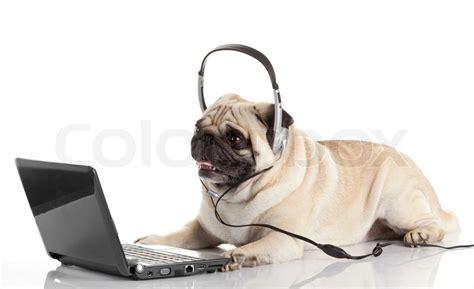 pug computer pin pug computer animals animal memes 14413 results on