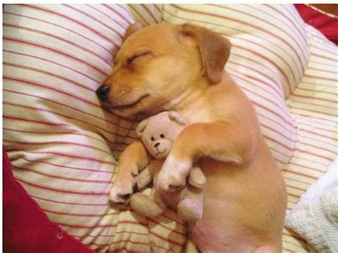 putting a to sleep debate putting stray in thailand to sleep is necessary debate org