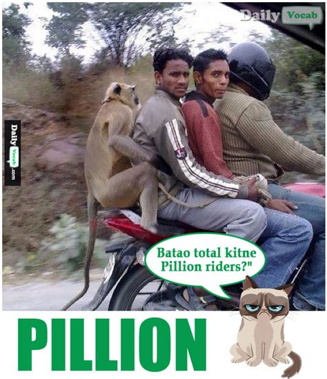 What Does Meme Mean In English - pillion meaning in hindi with picture dictionary