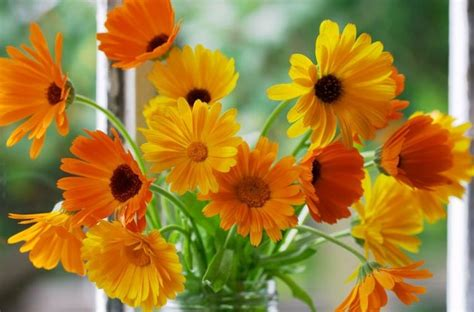 Types Of Orange Color by Calendula Pot Marigold