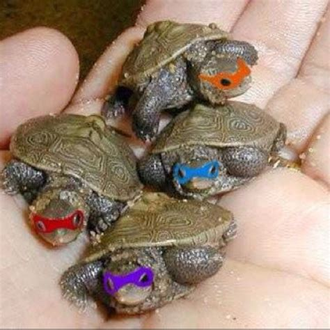 1000 ideas about pet turtle on turtle care