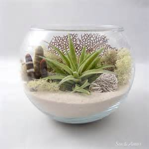 Indoor Moss Garden - sea side air plant terrarium desktop terrarium kit