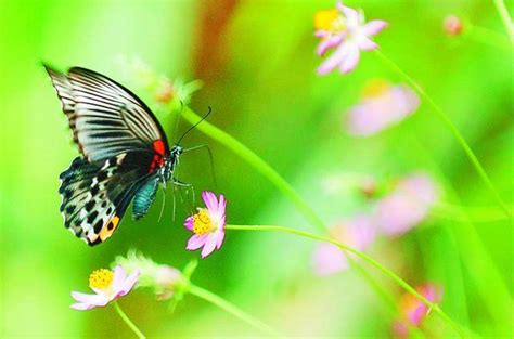 Khazanah Flora Dan Fauna Nusantara semua free september 2010