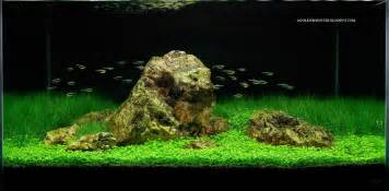 fishes aquariums fish tank setups aquascaping another