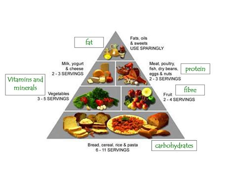 protein definition nutrition better health greater wealth balanced nutrition