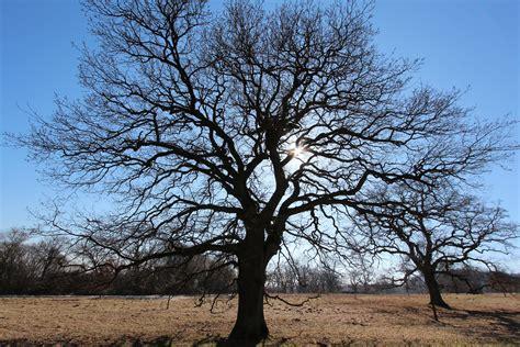bäume schneiden wie 6067 pflanzen im winter exotische pflanzen im winter sch tzen