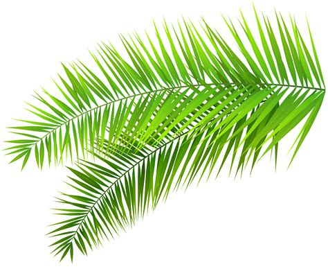 Palm Leaf by Leaves Clipart Palm Leaves Pencil And In Color Leaves