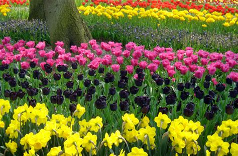world best flower world s best places to see beautiful flowers smartertravel