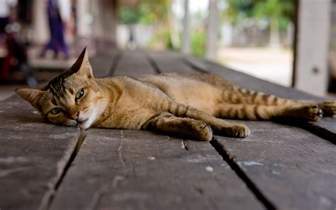 Floor Animals by Cat On Floor Wallpapers And Images Wallpapers Pictures Photos