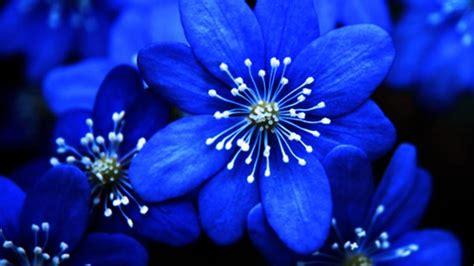 Blue Flowers As Decors For Weddings Frett Board Blue Flower