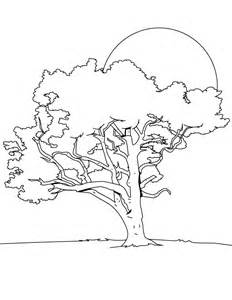 tree coloring pages printable free printable tree coloring pages for
