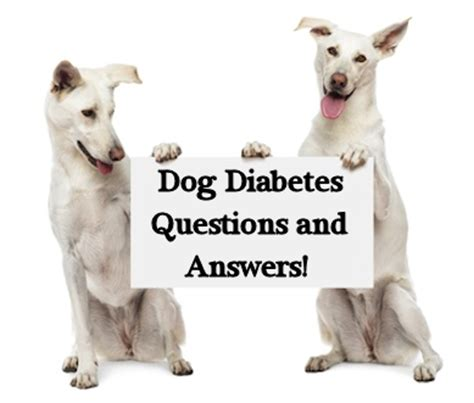 diabetes in dogs questions and answers about diabetes