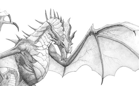the best drawings of dragons skyrim dragon by seigner on deviantart