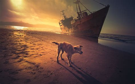 shipping puppies sunset sea ship wallpaper 1920x1200 417159 wallpaperup