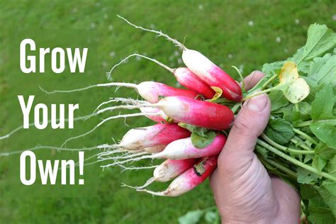 your own food 5 reasons why you should grow your own food nourish the planet
