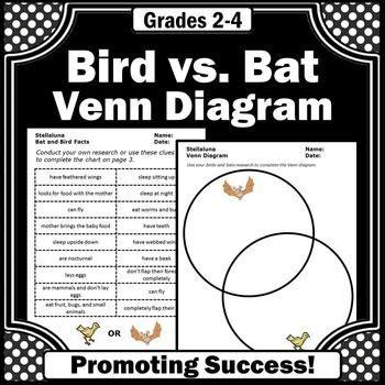 stellaluna venn diagram best 25 bat facts ideas on bat facts for information about bats and facts