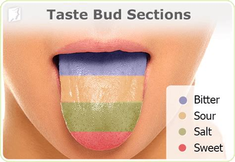 taste sections of the tongue top 10 misconceptions about hard facts people believe are
