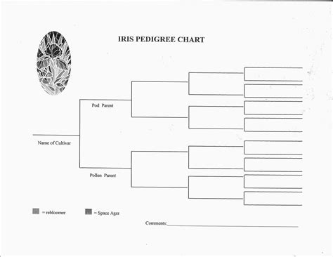 blank family pedigree chart five generation dog pedigree