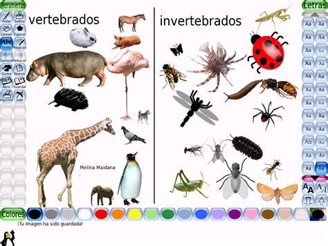 los animales vertebrados los animales vertebrados se subdividen en mamiferos