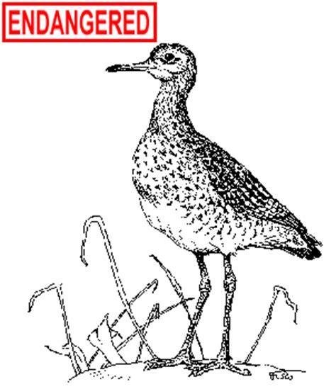 ct boating license age deep upland sandpiper fact sheet