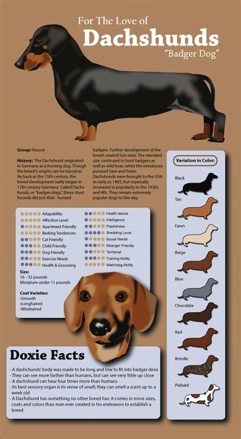 types of dogs and their personalities dachshund history facts and personality information that every owner needs to