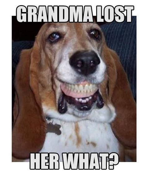 Dog Teeth Meme - 25 very funny teeth meme images you need to see before you die