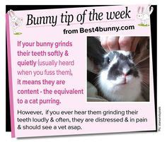 Must For The Week The House Bunny by 1000 Ideas About House Rabbit On Rabbits