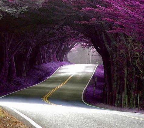beautiful amazing world amazing world fun beautiful tree tunnels
