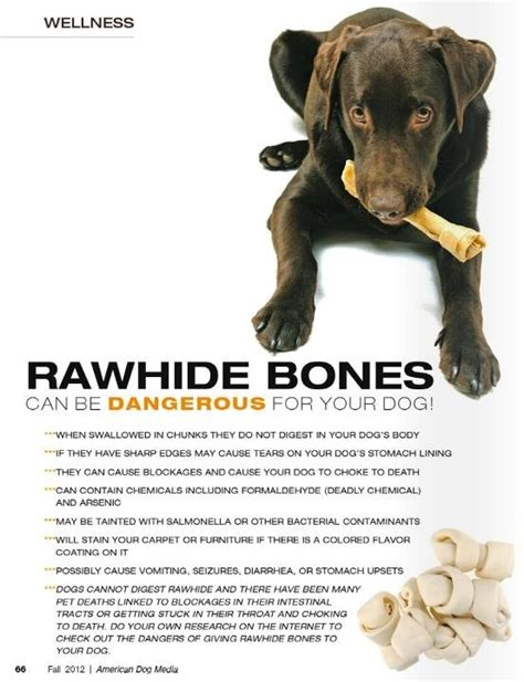 is rawhide bad for puppies pin by duge on helpful tips